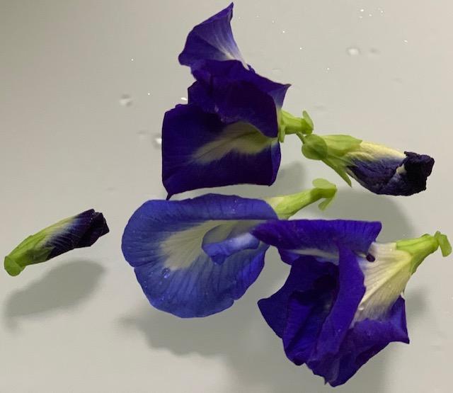 Butterfly blue peas
